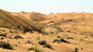 Photo of غداً .. السلطنة تحتفل باليوم العالمي لمكافحة التصحر.. (تقـريـر)