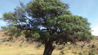 Photo of تدشين أول موقع لاستزراع الأشجار البرية ضمن مبادرة 10 ملايين شجرة..