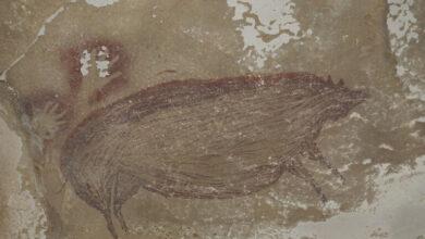 صورة الكشف عن أقدم فن صخري في العالم يقدر عمره بـ45500 عام..