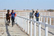 """صورة الحصان """"سهيل دي فناون"""" يتوّج بلقب مسابقة القدرة والتحمل لمسافة 100كم للعموم.."""